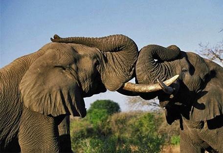 456_welgevonden_elephant.jpg