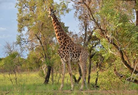 sunsafaris-7-welgevonden-game-reserve.jpg