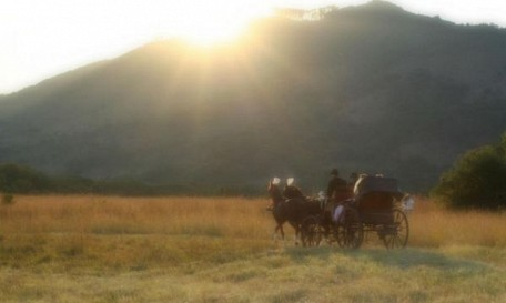 07-horse-cart.jpg