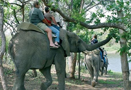 elephant_back.jpg