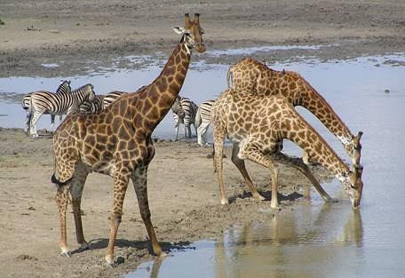 sunsafaris-6-madikwe-game-reserve.jpg