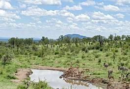 sunsafaris-1-royal-madikwe-river.jpg