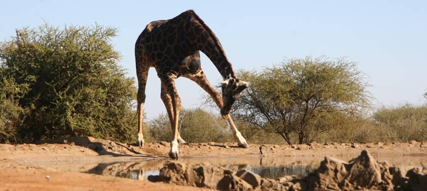 sunsafaris-1-madikwe-game-reserve.jpg