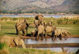 456_pilanesberg_elephants.jpg