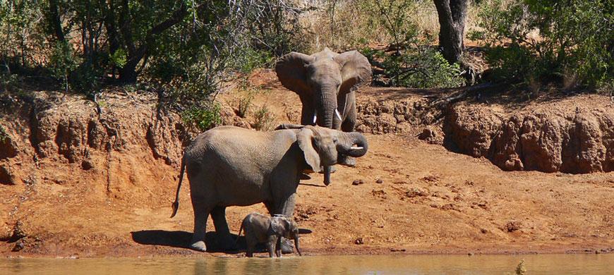 870_pilanesberg_elephants.jpg