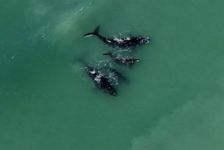 06-whales.jpg