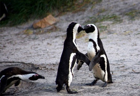 penguin_kiss.jpg
