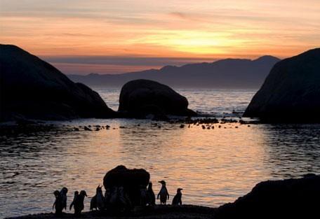 penguin_sunset.jpg