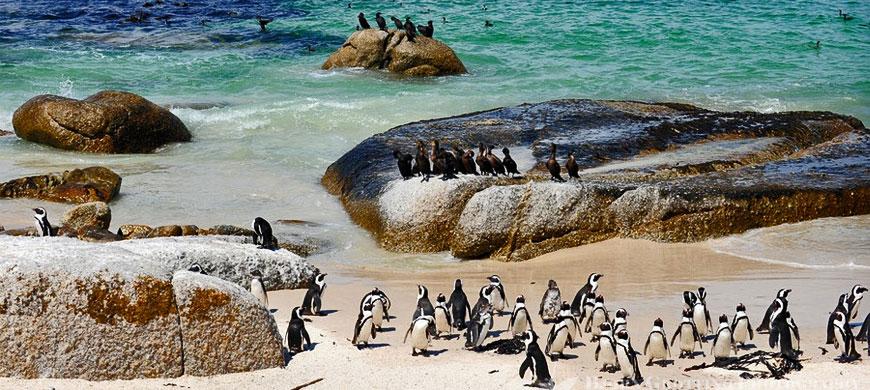 penguins_water.jpg