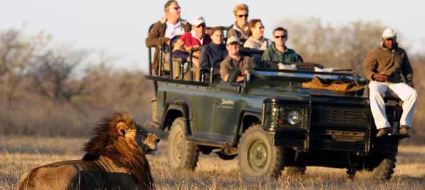 south-africa-wide-lion-game-drive.jpg