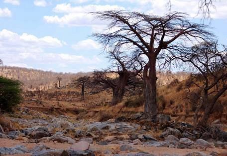 sunsafaris-6-tanzania-safari-operator.jpg