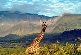 01-giraffe.jpg