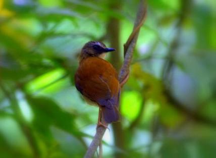 456_gombestream_bird.jpg