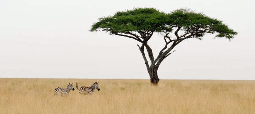 870_oremiti_zebra.jpg