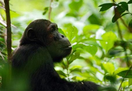 a01-chimp.jpg