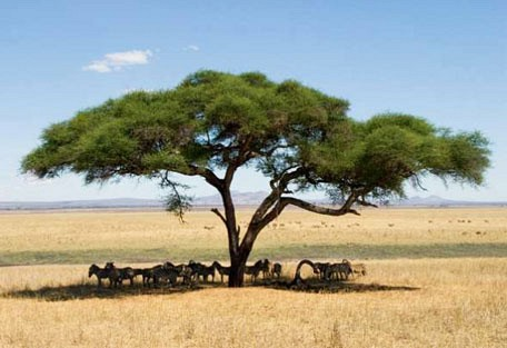 06-tree.jpg