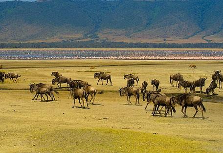 wildebeest_flamingo.jpg
