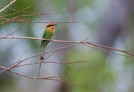 02-bee-eater.jpg