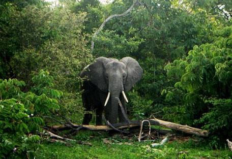 elephant_green.jpg