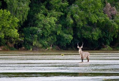 04-waterbuck.jpg