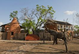 456a_amaraselous_elephant.jpg