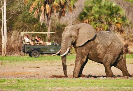 t08-elephant.jpg