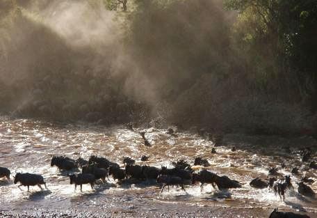 serengeti-migration.jpg