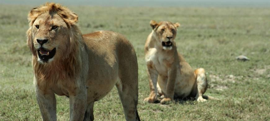 sunsafaris-1-bologonya-under-canvas-safari-camp.jpg