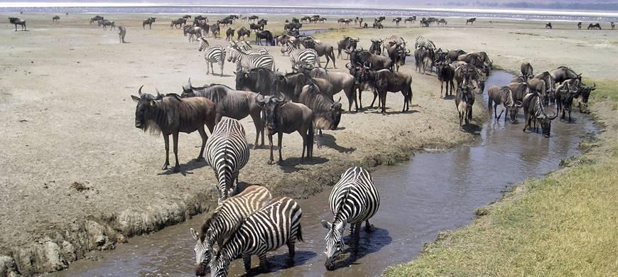 sunsafaris-3-bologonya-under-canvas-safari-camp.jpg