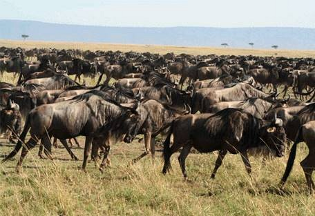 sunsafaris-2-buffalo-luxury-camp.jpg