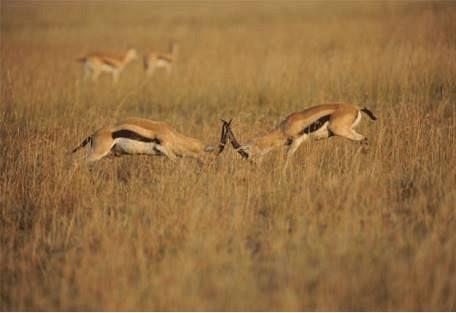 sunsafaris-3-buffalo-luxury-camp.jpg