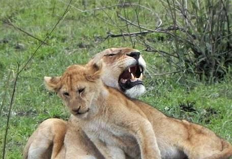 sunsafaris-9-buffalo-luxury-camp.jpg