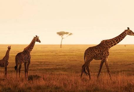 sunsafaris-11-four-seasons.jpeg
