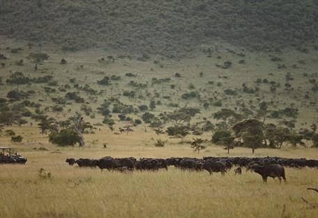 sunsafaris-9-andBeyond-Klein's-Camp.jpg