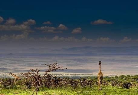 sunsafaris-5Lemala_ndutu_mobile_Tented_Camp.jpg