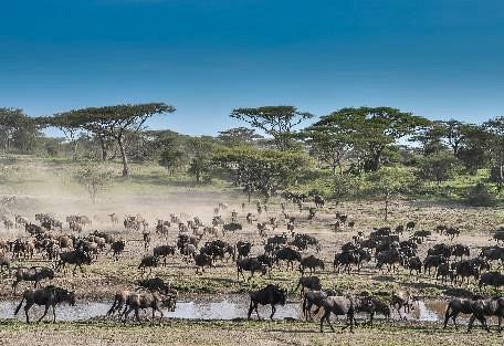 sunsafaris-6Lemala_ndutu_mobile_Tented_Camp.jpg