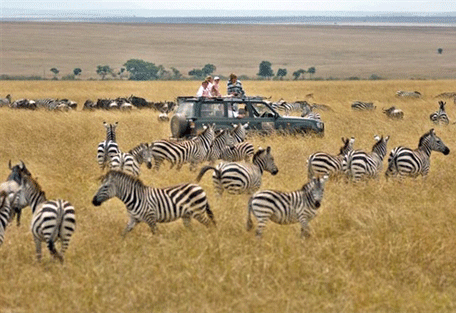 456h_kensington-serengeti-camp_zebras.jpg