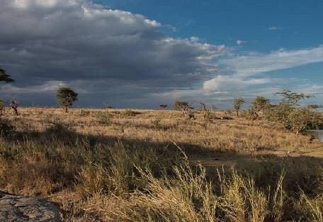sunsafaris-2-namiri-plains.jpg