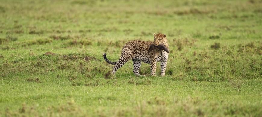 sunsafaris-3-namiri-plains.jpg