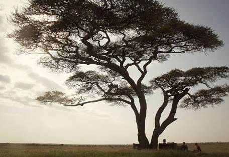sunsafaris-4-nduara-loliondo.jpg