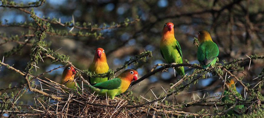 lovebirds.jpg