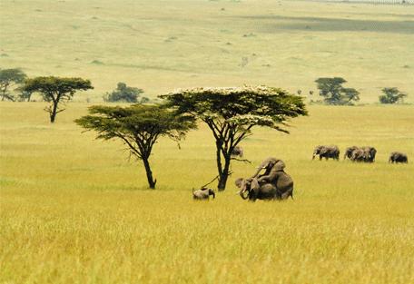 456h_nomad-lamai-camp_elephants.jpg