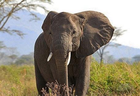 456h_ronjocamp_elephant.jpg