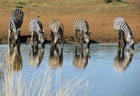 456d_serengeti-halisi-camp.jpg