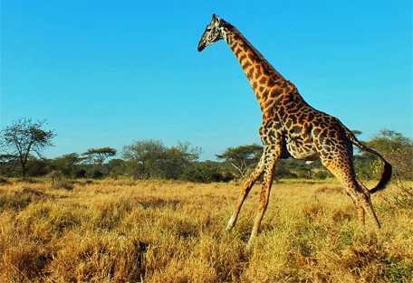 456f_serengeti-halisi-camp.jpg