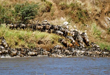 456i_serengeti-mara-camp_wildebeest-migration.jpg