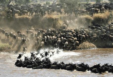 456i_serengeti-safari-camp_wildebeest-migration.jpg