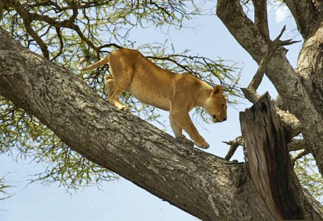 f07-lion.jpg