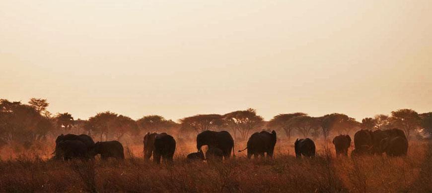elephant_dusk.jpg