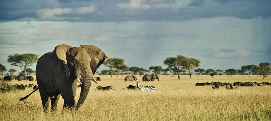 870_simbalodge_elephant.jpg